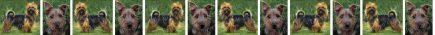 Australian Terrier Dog Breed Custom Printed Grosgrain Ribbon