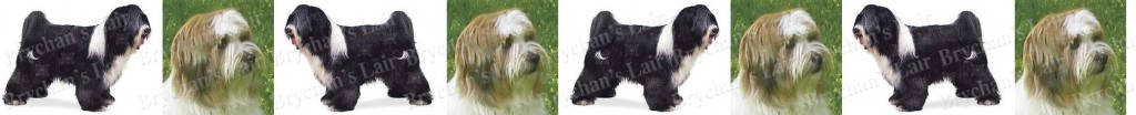 Tibetan Terrier Dog Breed Custom Printed Grosgrain Ribbon