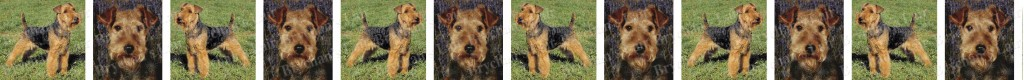 Welsh Terrier Dog Breed Custom Printed Grosgrain Ribbon