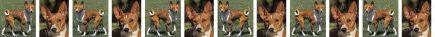 Basenjis Dog Breed Custom Printed Grosgrain Ribbon