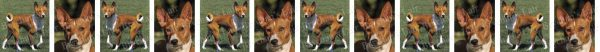 Basenjis Dog Breed Custom Printed Grosgrain Ribbon