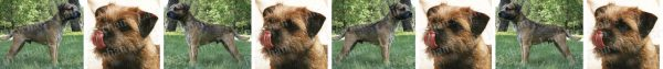 Border Terrier Dog Breed Custom Printed Grosgrain Ribbon