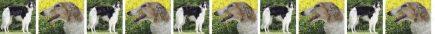 Borzois Dog Breed Custom Printed Grosgrain Ribbon