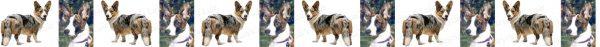 Cardigan Welsh Corgi No1 Dog Breed Custom Printed Grosgrain Ribbon