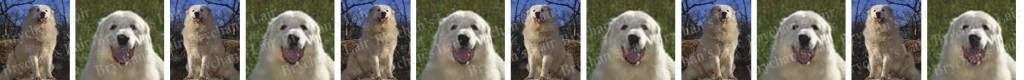 Great Pyrenees Dog Breed Custom Printed Grosgrain Ribbon