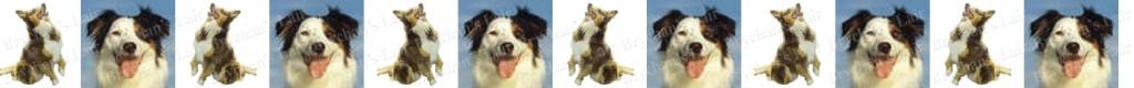 Australian Shepherd Dog Breed Custom Printed Grosgrain Ribbon