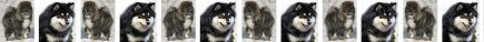 Finnish Lapphund Dog Breed Custom Printed Grosgrain Ribbon