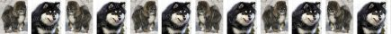 Finnish Lapphund Dog Breed Custom Printed Grosgrain Ribbon