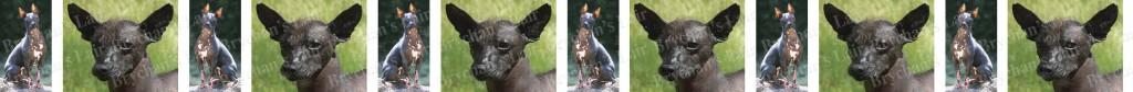 Mexican Hairless Dog Breed Custom Printed Grosgrain Ribbon