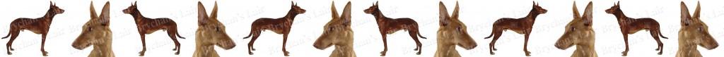 Pharaoh Dog Breed Custom Printed Grosgrain Ribbon