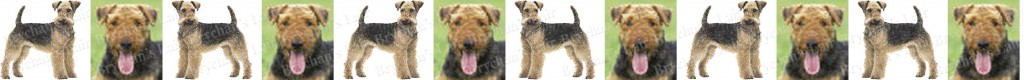 Airedale Terrier Dog Breed Custom Printed Grosgrain Ribbon
