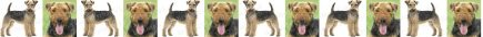 Airedale Terrier Dog Breed Custom Printed Grosgrain Ribbon
