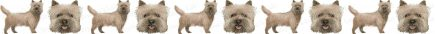 Cairn Terrier Dog Breed Custom Printed Grosgrain Ribbon