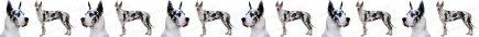 Harlequin Great Dane Dog Breed Custom Printed Grosgrain Ribbon