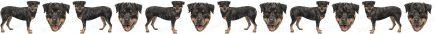 Rottweiler Dog Breed Custom Printed Grosgrain Ribbon