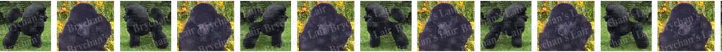 Black Poodle Dog Breed Custom Printed Grosgrain Ribbon