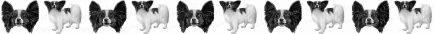Black & White Papillon Dog Breed Custom Printed Grosgrain Ribbon