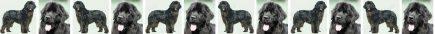 Black Newfoundland Dog Breed Custom Printed Grosgrain Ribbon
