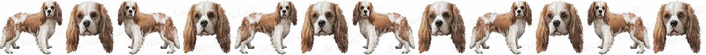 Cavalier King Charles Blem Dog Breed Custom Printed Grosgrain Ribbon