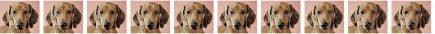 Dachshund No3 Dog Breed Custom Printed Grosgrain Ribbon