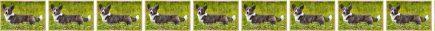 Cardigan Welsh Corgi No2 Dog Breed Custom Printed Grosgrain Ribbon