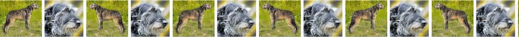 Irish Wolfhound Dog Breed Custom Printed Grosgrain Ribbon
