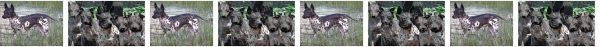 American Hairless Terrier Dog Breed Custom Printed Grosgrain Ribbon