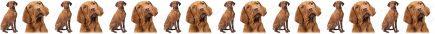 Vizslas Dog Breed Custom Printed Grosgrain Ribbon