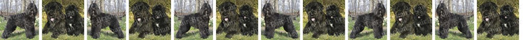 Bouviers des Flandes Dog Breed Custom Printed Grosgrain Ribbon