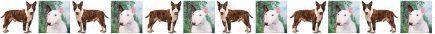 Bull Terrier Dog Breed Custom Printed Grosgrain Ribbon