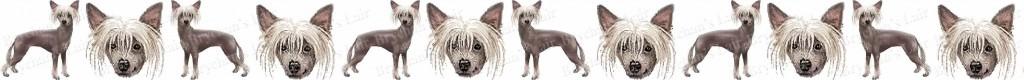 Chinese Crested Dog Breed Custom Printed Grosgrain Ribbon