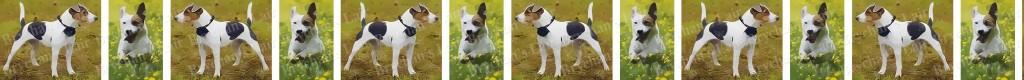 Jack Russell Terrier Dog Breed Custom Printed Grosgrain Ribbon