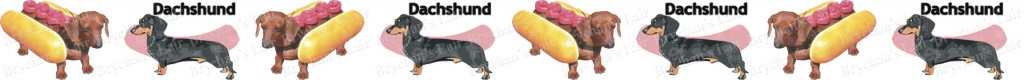 Dachshund No1 Dog Breed Custom Printed Grosgrain Ribbon