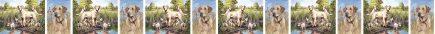 Yellow Labrador Retriever No3 Dog Breed Custom Printed Grosgrain Ribbon