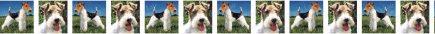Wire Fox Terrier Dog Breed Custom Printed Grosgrain Ribbon