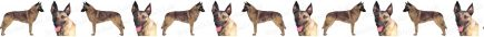 Belgian Malinois Dog Breed Custom Printed Grosgrain Ribbon