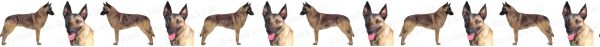 Belgian Malinois Dog Breed Custom Printed Grosgrain Ribbon