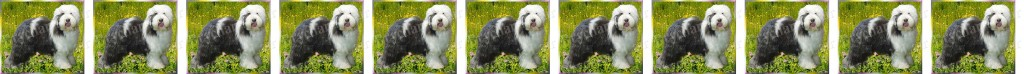 Old English Sheepdog No2 Dog Breed Custom Printed Grosgrain Ribbon