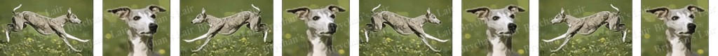 Greyhound Dog Breed Custom Printed Grosgrain Ribbon