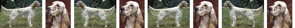 English Setter Brown Dog Breed Custom Printed Grosgrain Ribbon