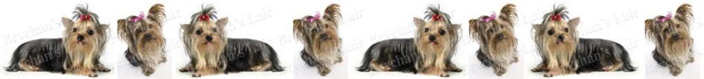 Yorkshire Terrier With Bow Dog Breed Custom Printed Grosgrain Ribbon