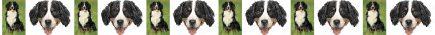 Bernese Mountain Dog Breed Custom Printed Grosgrain Ribbon