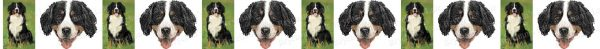 Bernese Mountain Dog Breed Custom Printed Grosgrain Ribbon