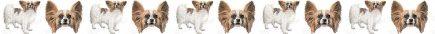 Papillon Dog Breed Custom Printed Ribbon