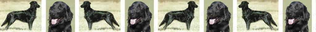 Flat Coated Retriever Dog Breed Custom Printed Ribbon