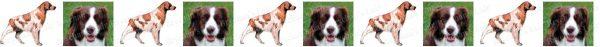 Brittany Spaniel Dog Breed Custom Printed Grosgrain Ribbon