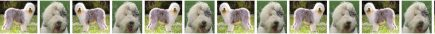 Old English Sheepdog No1 Dog Breed Custom Printed Grosgrain Ribbon