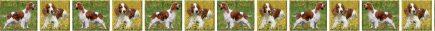 Welsh Springer Spaniel Dog Breed Custom Printed Grosgrain Ribbon