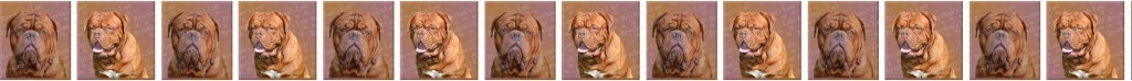 Dogue de Bordeaux Dog Breed Custom Printed Grosgrain Ribbon