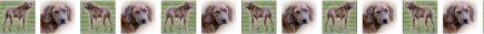 Brindle Plott Hound Dog Breed Designer Grosgrain Ribbon Design Repeated